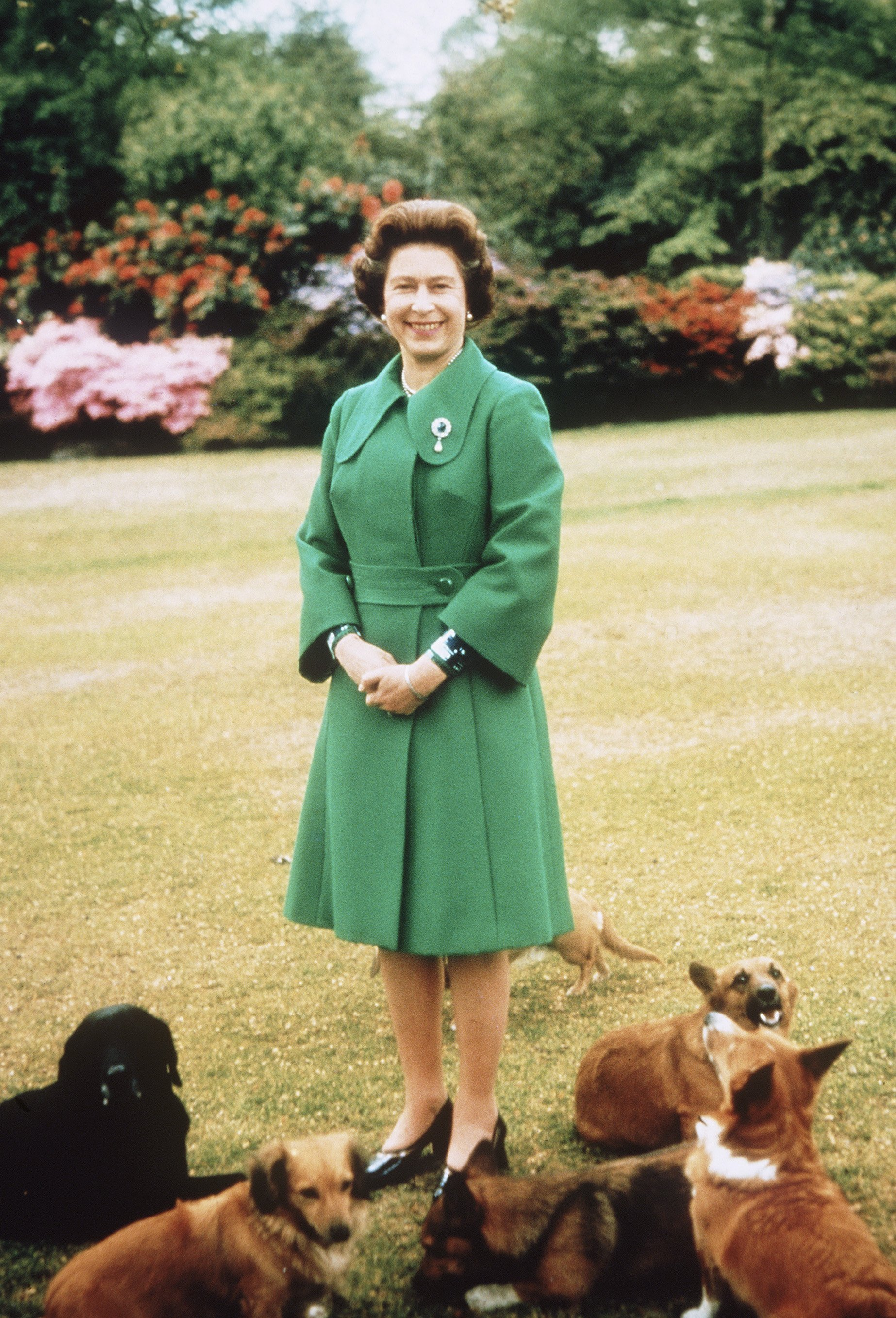 Queen Elizabeth II relaxes at Sandringham with her corgis on an unspecified date. | Source: Getty Images.