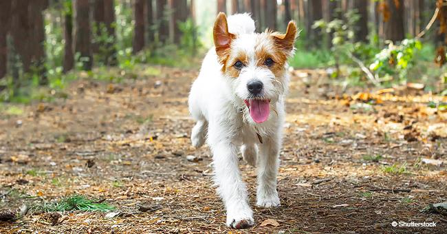Billy, le chien perdu, a finalement été sauvé après six jours dans un tunnel sous terre, sans eau ni nourriture