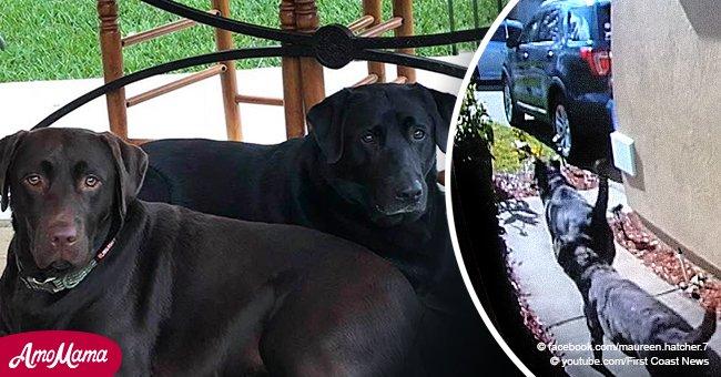 Dos perros salvaron la vida de sus dueños haciendo ruido y ladrando cerca de los vecinos
