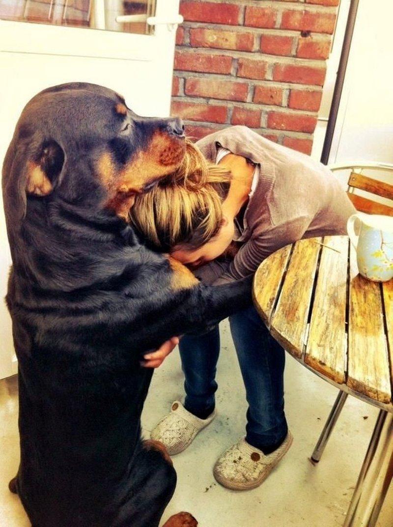 Perro amoroso / Imagen tomada de: Reddit