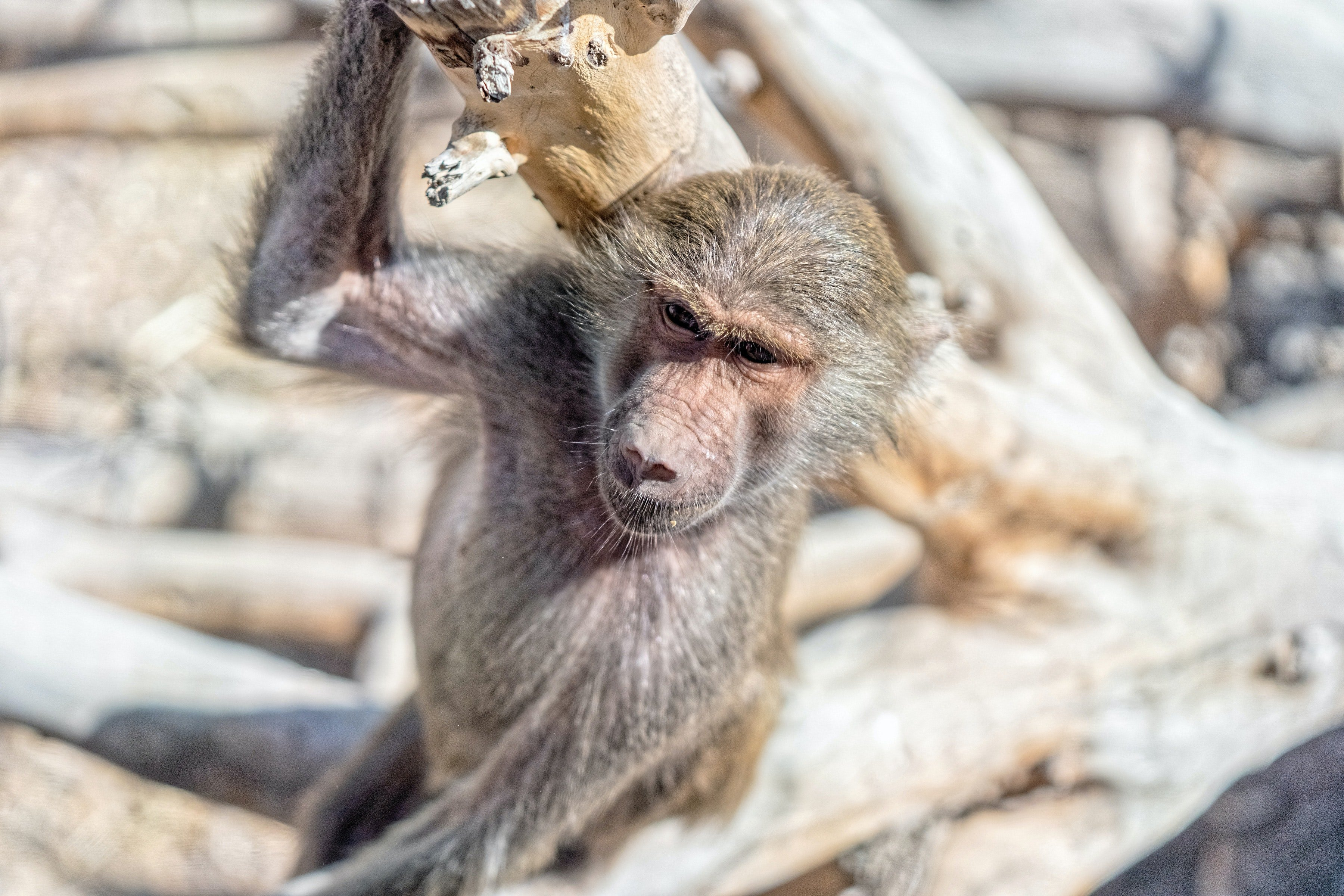 Pictured - A photo of a monkey hanging on a tree branch | Source: Pexels