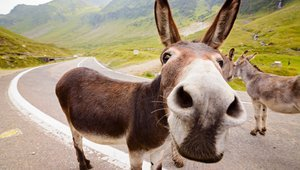 An adorable donkey standing on the road.   Photo: Shutterstock