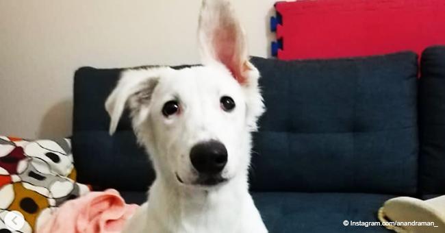 Perro desnutrido ruega que lo rescaten y no puede estar más agradecido con su salvador