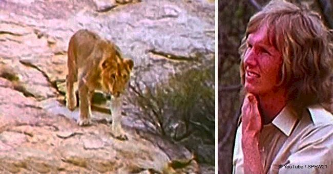 Men come to Africa to meet the lion they raised few years ago, despite warnings