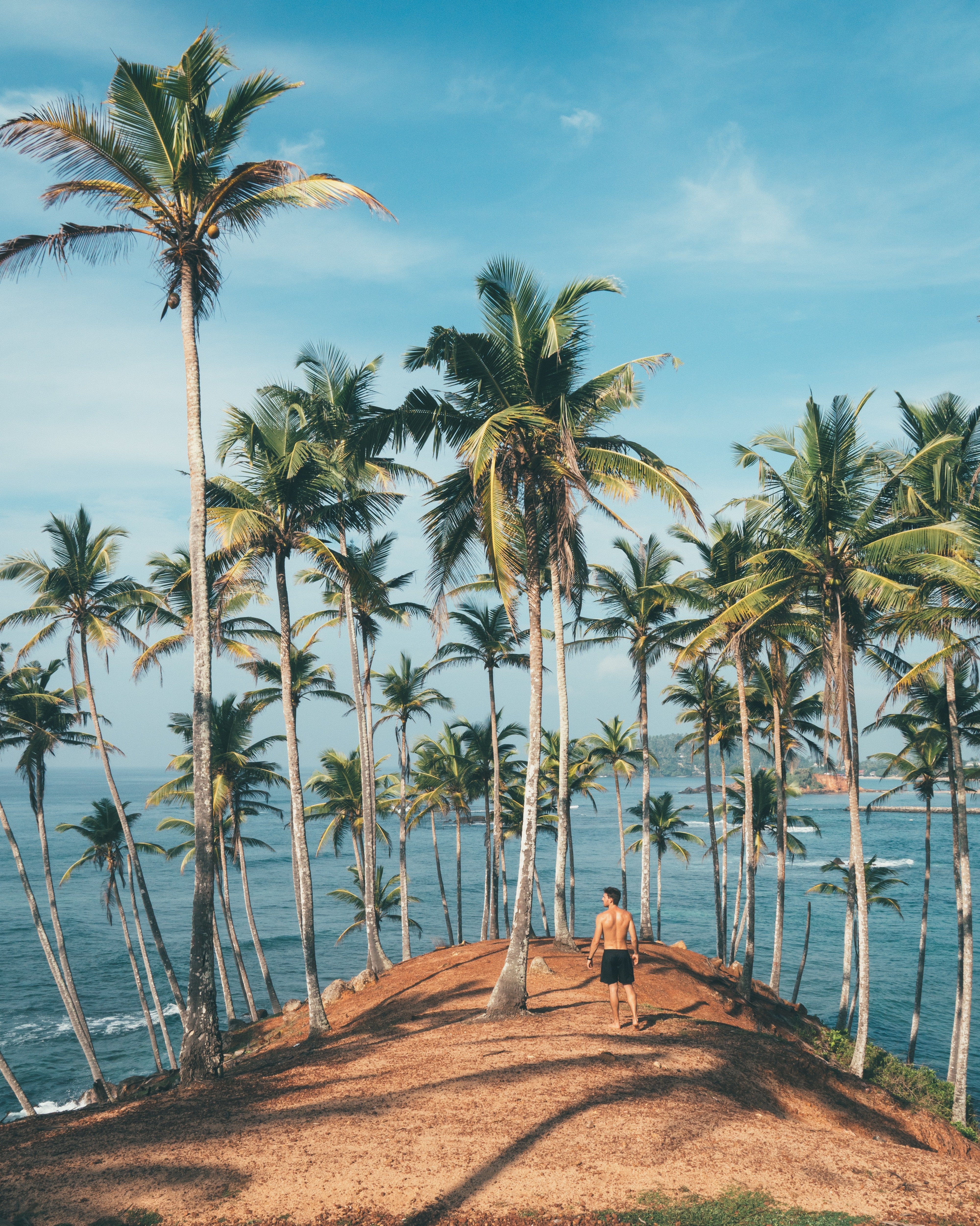 The stranded man climbed the coconut tree and his comment shocked the married couple. | Photo: Pexels