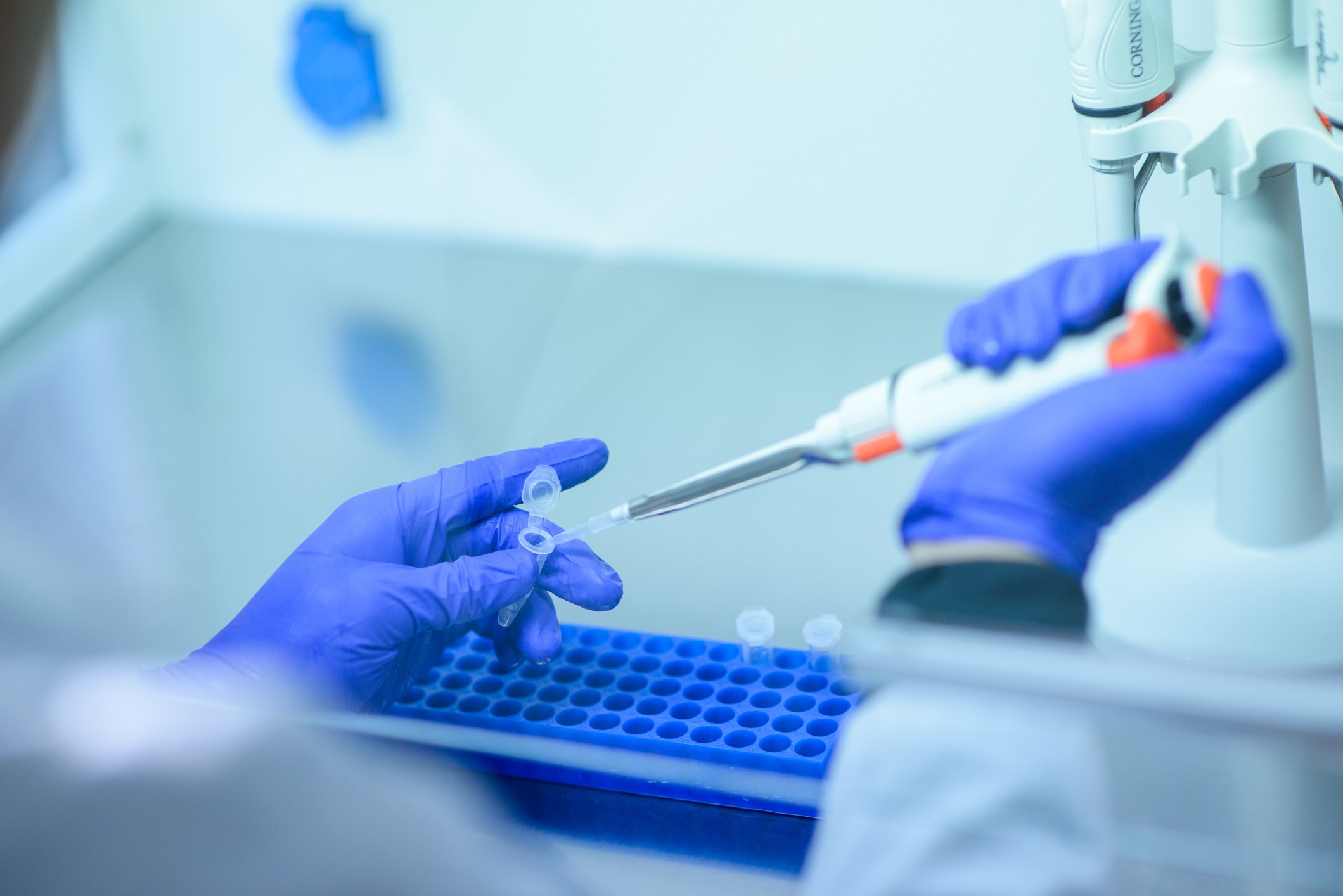 A portrait photo of a genetic test in the lab.   Photo: Getty Images
