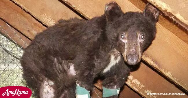 Miracle bear who survived devastating wildfire found dead