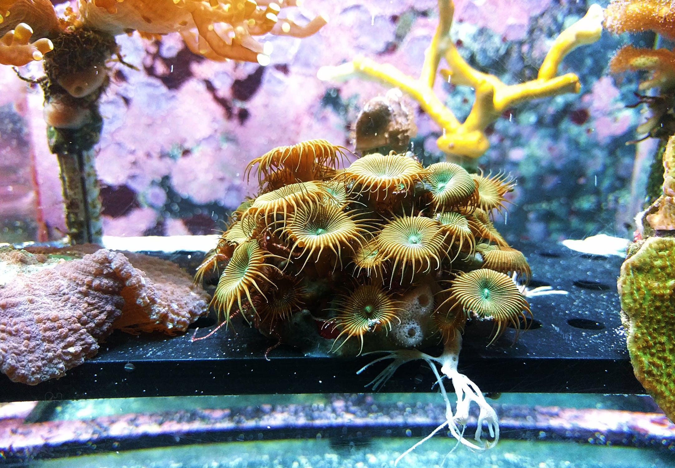 Corales coloridos dentro de una pecera. | Imagen: Pexels