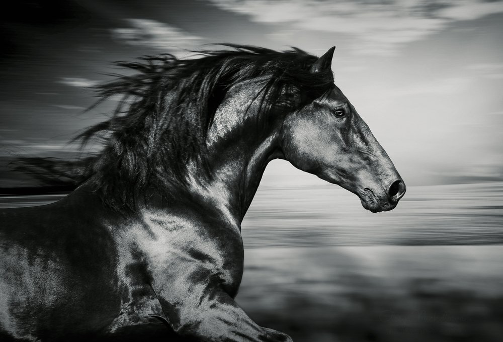 Cheval. Image d'illustration / Source : Shutterstock