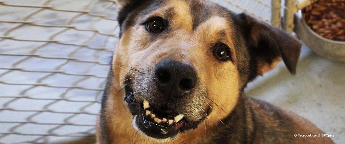 Perro no para de sonreír cuando finalmente es adoptado tras más de 6 años en un refugio