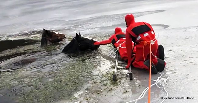 Rescuers desperately try to save 2 Clydesdales from an icy lake in a dramatic video