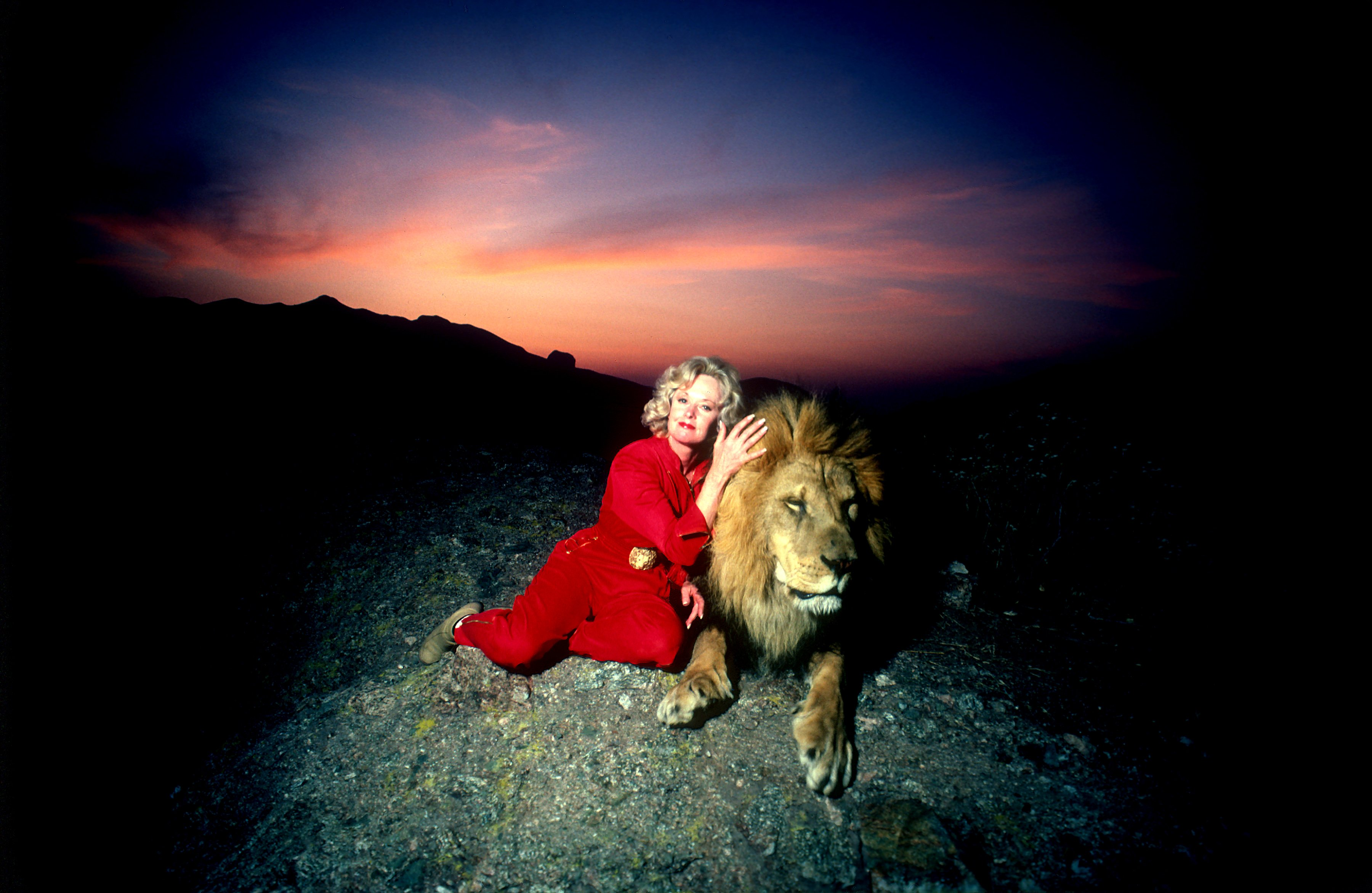 Actress Tipi Hedren, sits on a hill overlooking her Saugus Animal reserve with a full grown male lion on November 16, 1983 | Photo: Getty Images