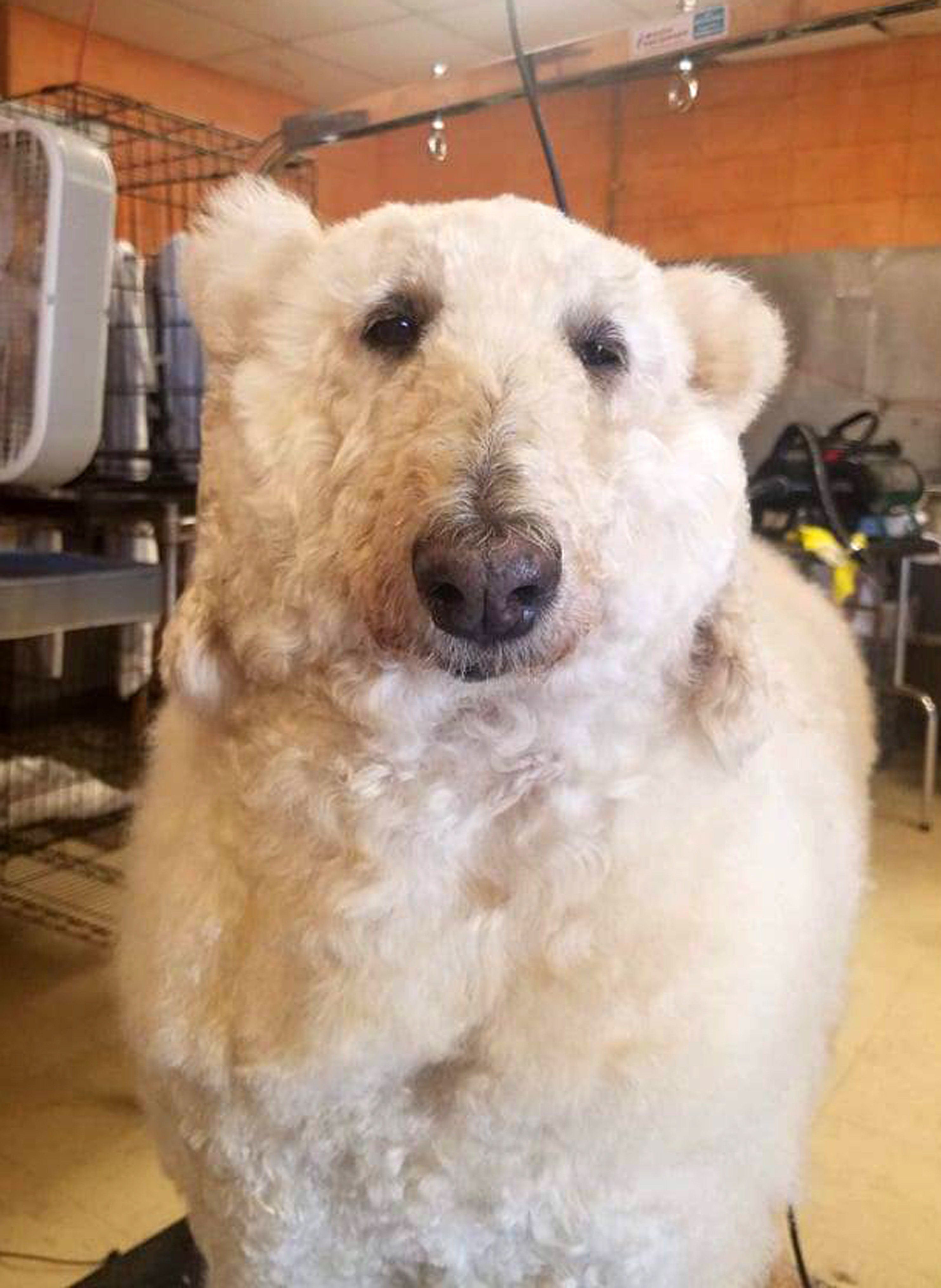 Bijou as a polar bear. | Source: Caters