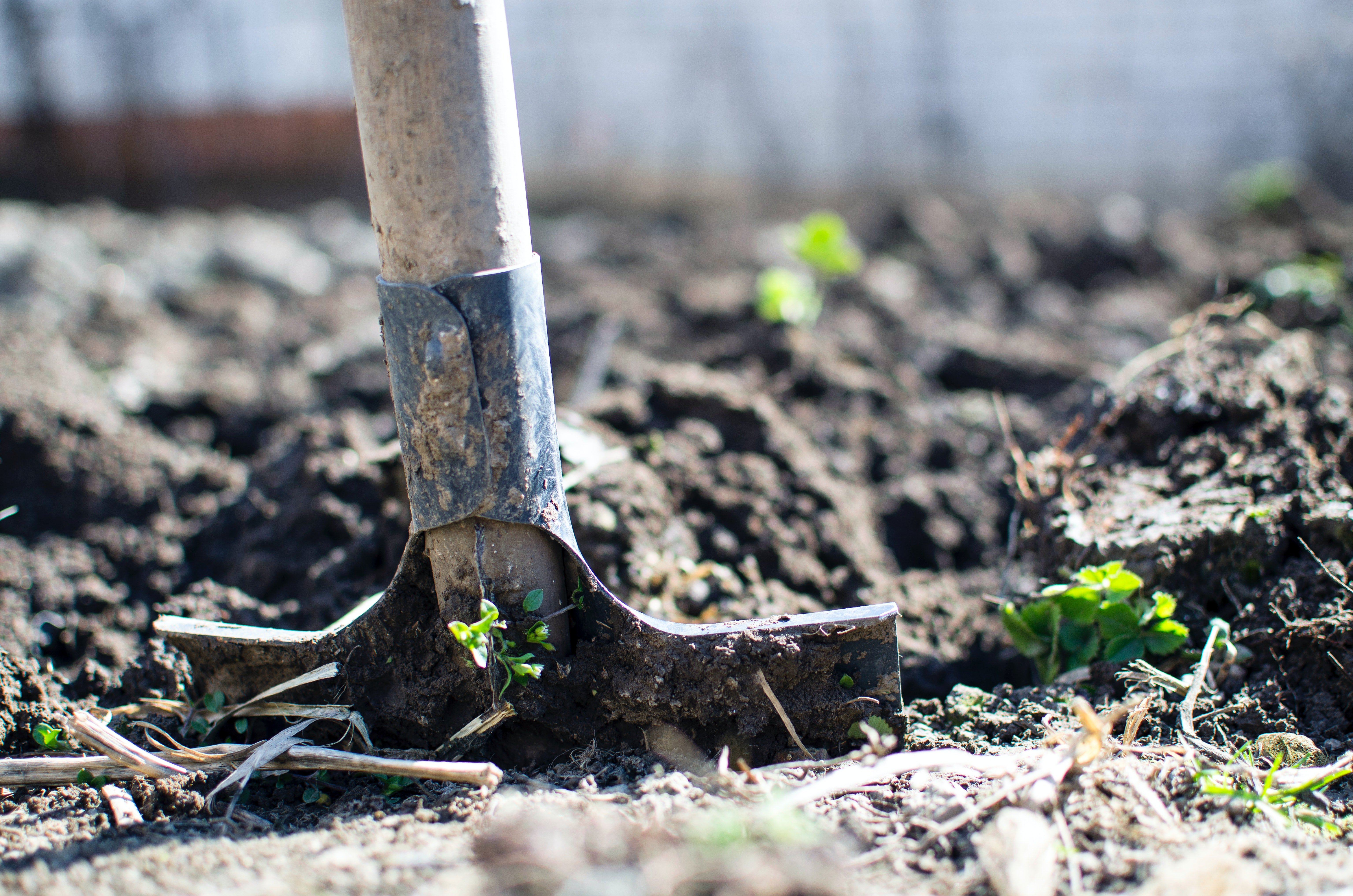 A shovel for digging a hole | Photo: Pexels