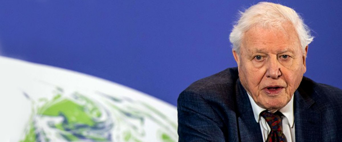 David Attenborough at the launch of the UK-hosted COP26 UN Climate Summit on February 4, 2020 in London | Photo: Getty Images