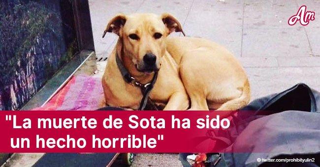 Alcaldesa de Barcelona pide testigos del asesinato de la querida perra, Sota