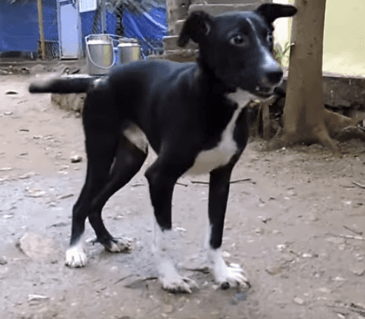 Source: YouTube/ Animal Aid Unlimited, India