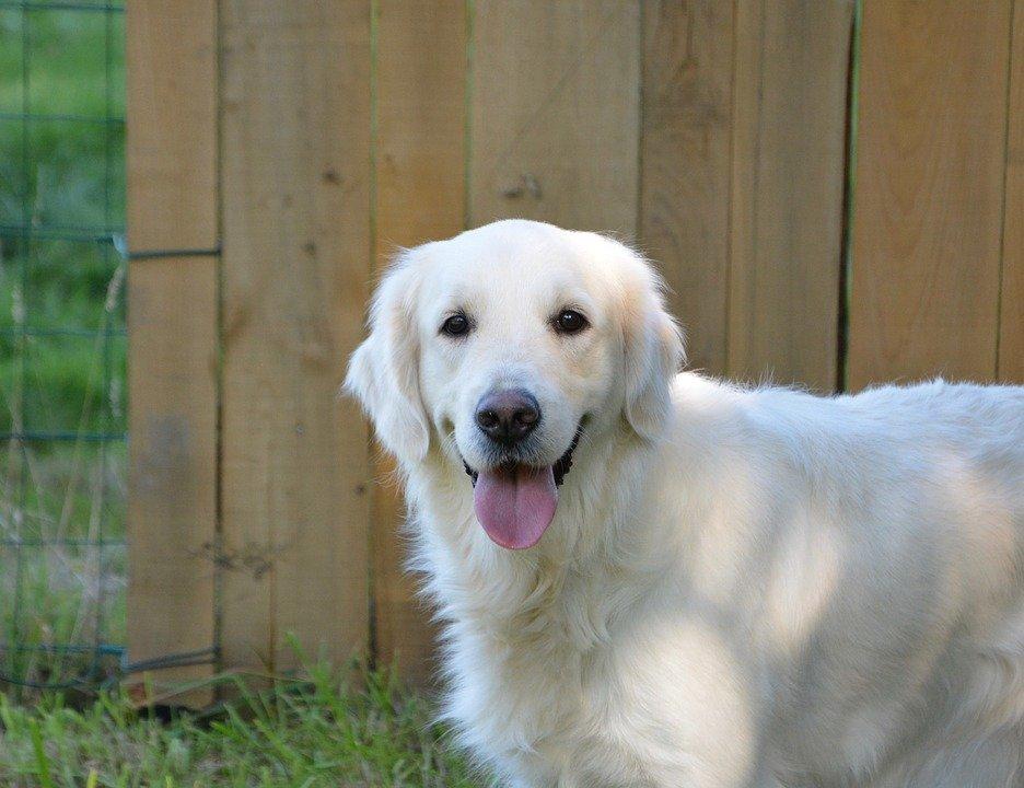 Un chien | Photo : Pixabay