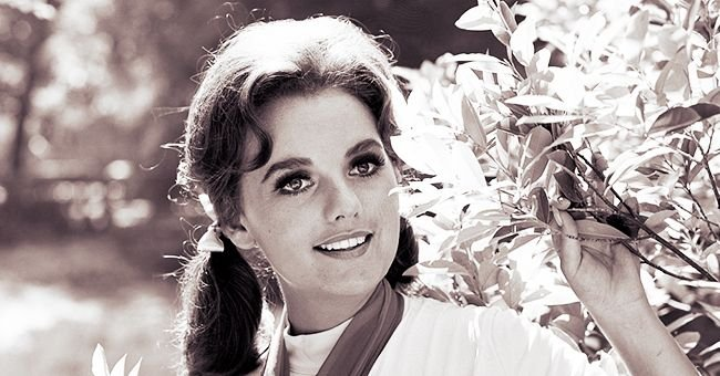Dawn Wells in 'Gilligan's Island' — Inside Her Life More Than 50 Years after the Show Ended
