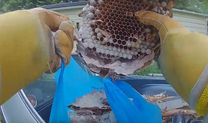 Source: YouTube/The Bee Man