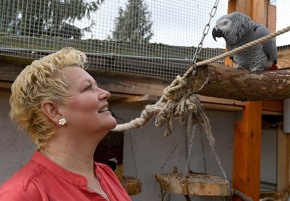 The grey parrot Rocco converses with his owner Kerstin Frommke at their home in Leegebruch, Germany | Photo: Getty Images
