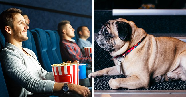 Daily Joke: A Man Brought His Dog with Him to the Cinema