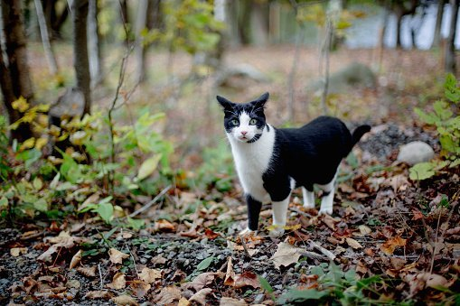 Photo of a Cat in autumn color leaves walking in a forest | Photo: Getty Images