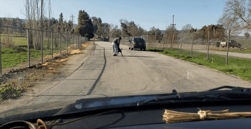 A man pushing his dog away in an attempt of abandoning him at a road in Lake Ming, Bakersfield, California. | Source: YouTube/ViralHog