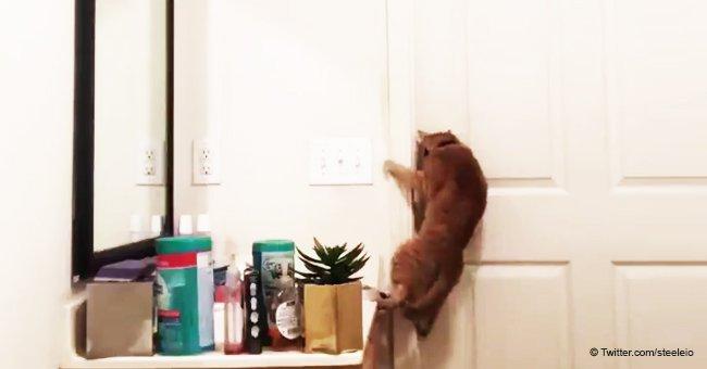 Increíble maniobra de gato para escapar del baño causa enorme reacción en las redes sociales