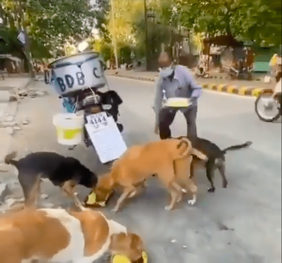 Screenshot of video showing a man feeding stray dogs.   Source: Reddit/ @HumansBeingBros