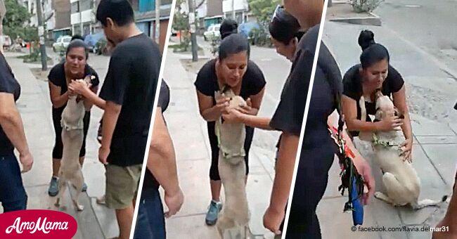 Un chien qui avait été perdu à Noël n'arrête pas de faire des câlins à ses maîtres après les avoir retrouvés