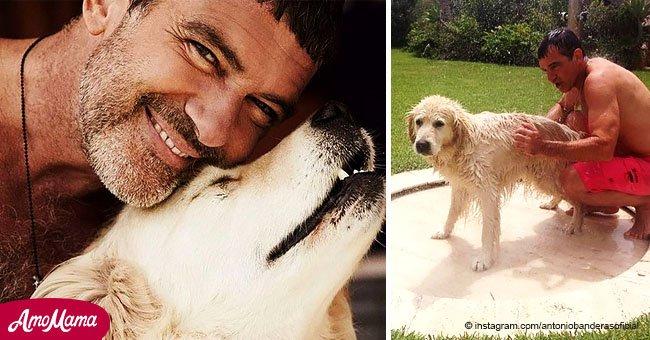 Antonio Banderas et sa copine font un adieu émouvant à leur chien bien-aimé qui est mort