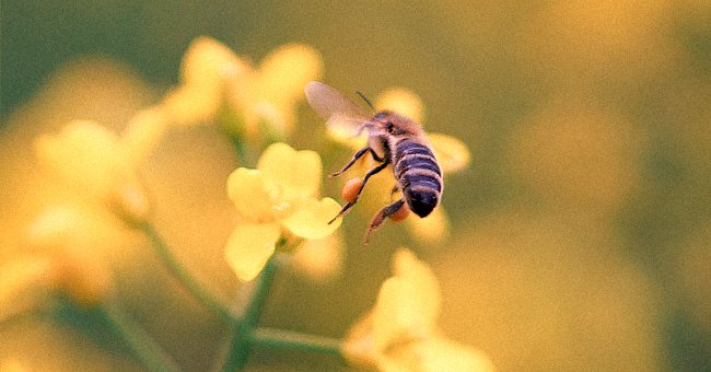 Daily Joke: A Bee Is Driving along the Highway
