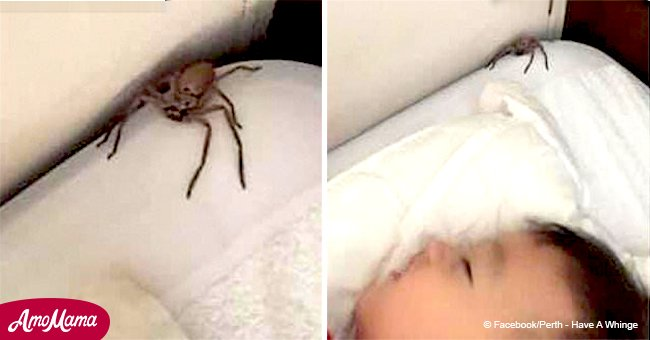 Father admits why he is glad to see an enormous huntsman near his sleeping son