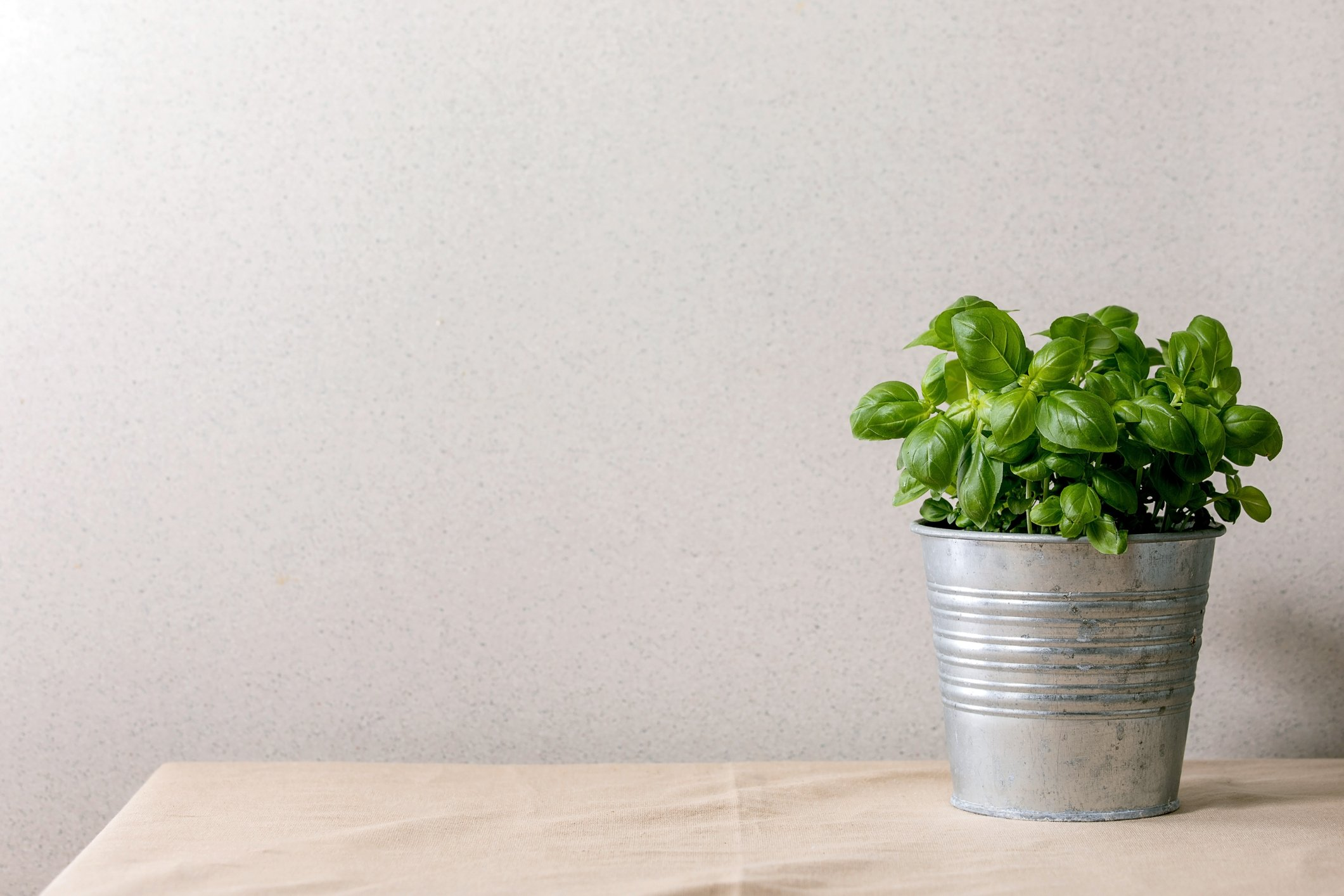 Une plante de salade dans un pot. | Photo : Getty Images