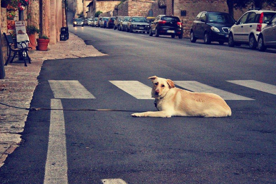 Un chien abandonné au milieu de la rue │Image : Pixabay