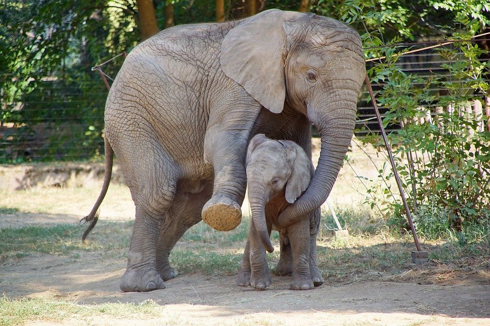 Elefantes  Foto: Pixabay