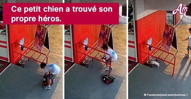 Un petit garçon sauve la vie d'un chiot en le portant dans son sac jusqu'à un lieu sûr