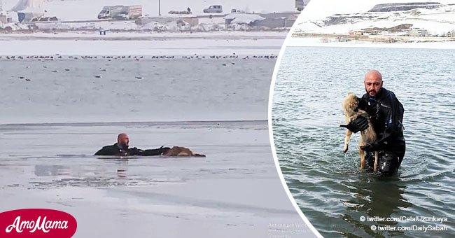 Héroe policía se lanza al lago congelado para salvar a un perrito atrapado en conmovedor video