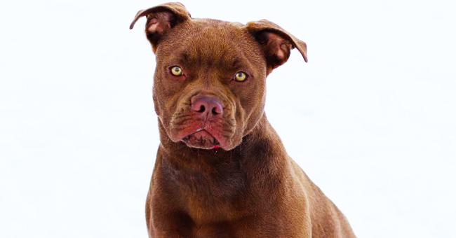 2 000 km parcourus pour ramener le chien et pour entendre que son maître n'en veut plus
