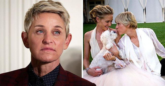 Fans React to Ellen DeGeneres as She Mourns the Passing of Her Dog Wolf