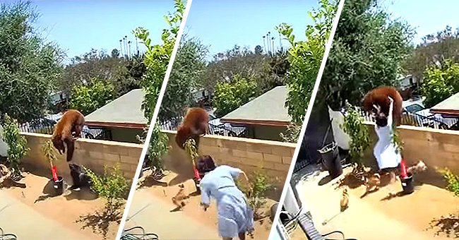 A series of photos from the viral video that shows Hailey jumping into action. | Photo: YouTube/ABC7