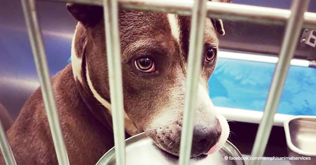 Perro se niega a ser adoptado de un refugio sin su tazón de comida