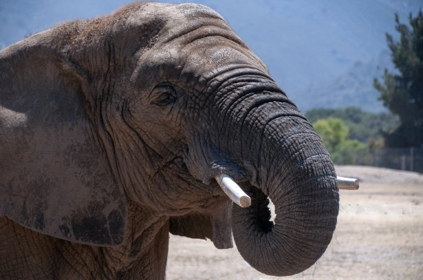 Elefant | Quelle: Public Domain Pictures
