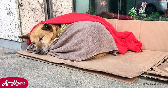 Dentist spends his free time covering stray dogs and cats with blankets to warm them up in winter