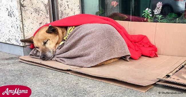 Dentista pasa tiempo libre poniendo mantas a perros y gatos callejeros para abrigarlos en invierno