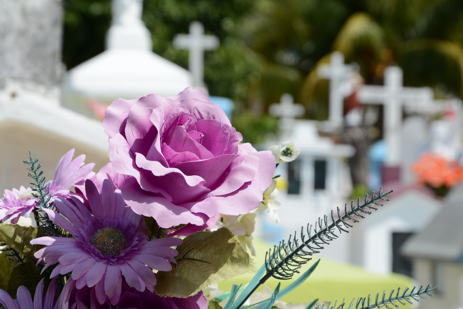 Photo of a beautiful flower at a graveyard. | Photo: Getty Images