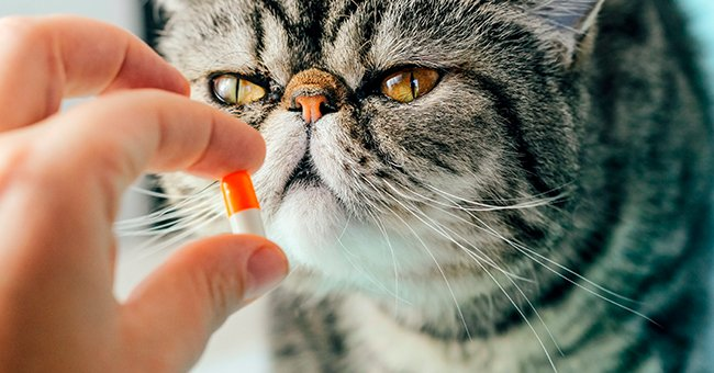 Daily Joke: Instruction on How to Give a Pill to a Cat