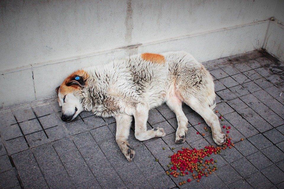 Perro durmiendo a la intemperie. | Foto: Pixabay
