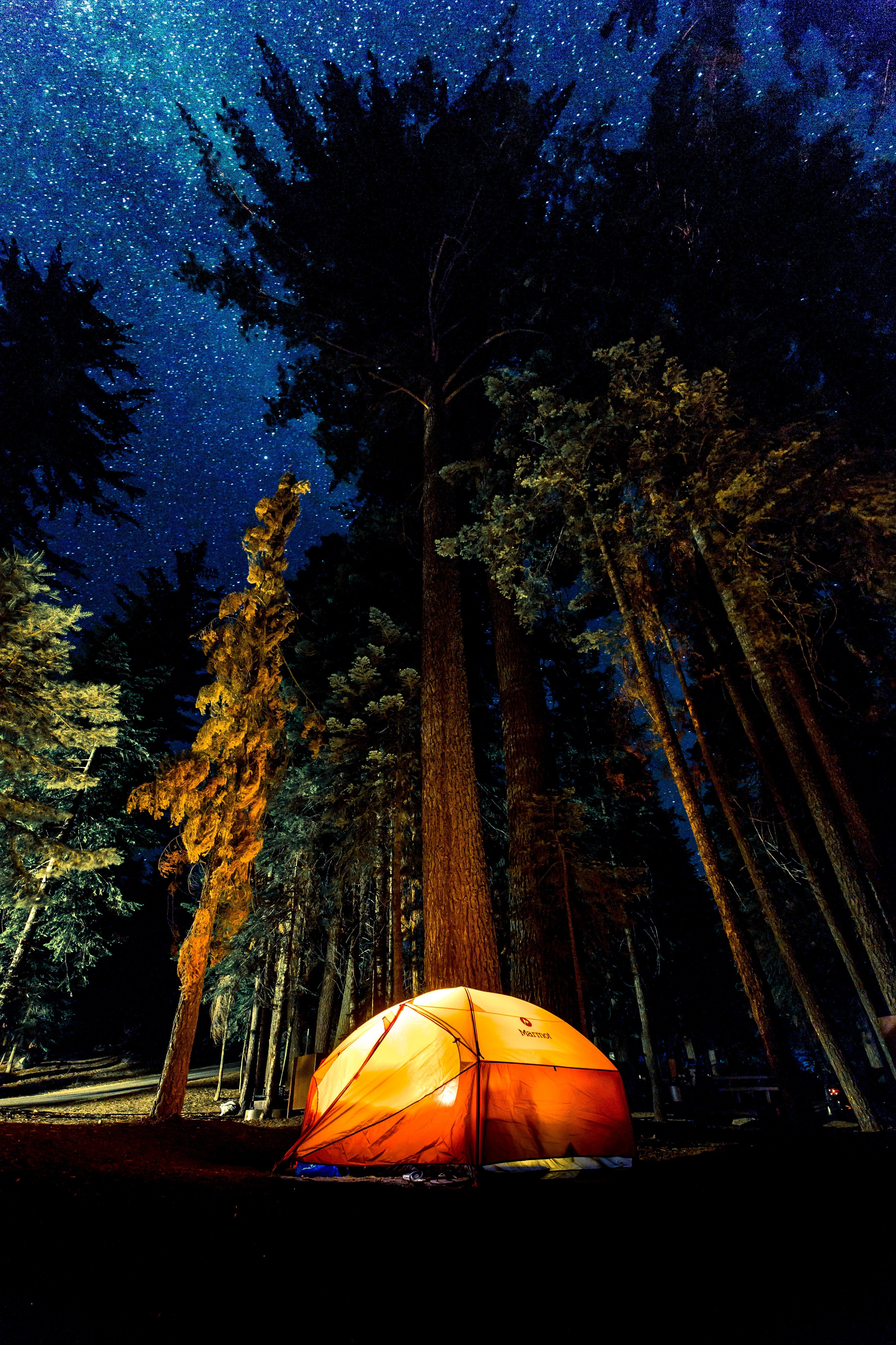 A lit tent in the forest.   Source: Unsplash